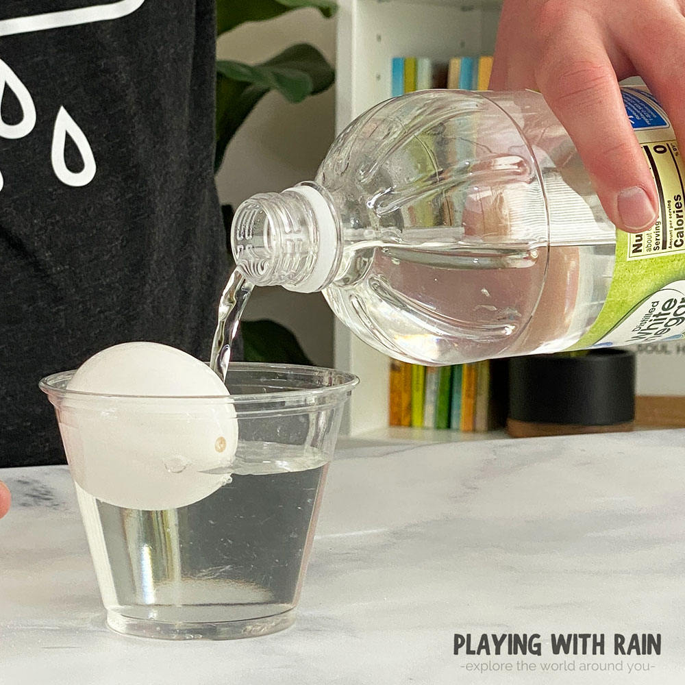 Place the eggshell into a cup of vinegar