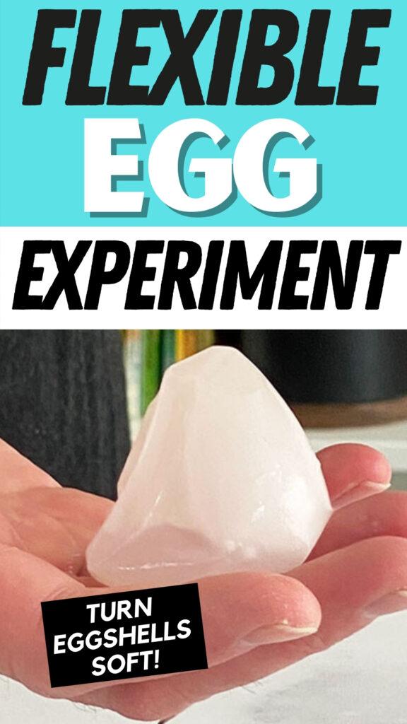 Flexible eggshell experiment